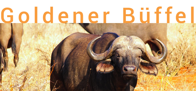 Goldener Büffel
